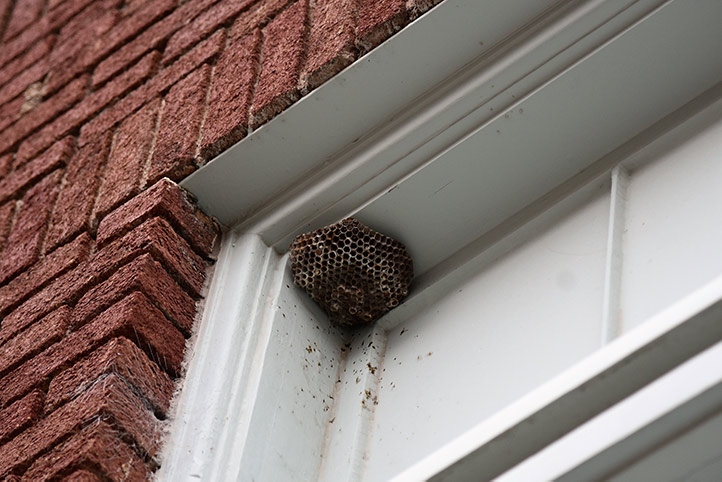 We provide a wasp nest removal service for domestic and commercial properties in Brent.